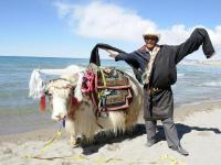 Namtso Lake Man and Yak