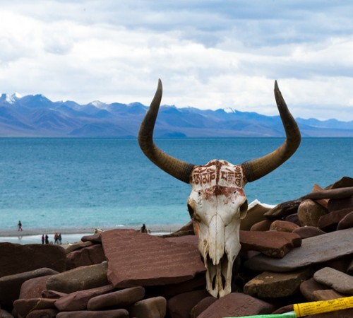 Namtso Lake Ox Head