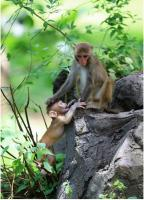 Sanya Nanwan Monkey Island Baby & Mother Monkey