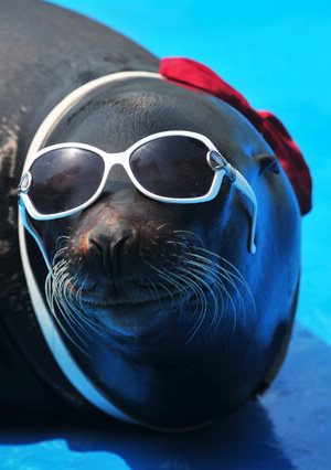 Fashion Seal