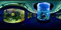 Qingdao Underwater World Sight