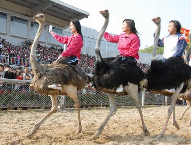safari park running ostrich shenzhen attractions travel