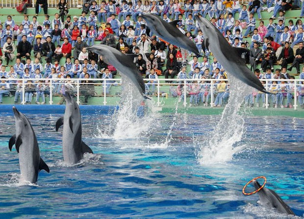 Safari Park Dolphin Performance