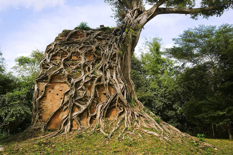Ancient Trees At Sambor Prei Kuk Kampong Thom Ruins