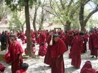 Sera Monastery Young Monks