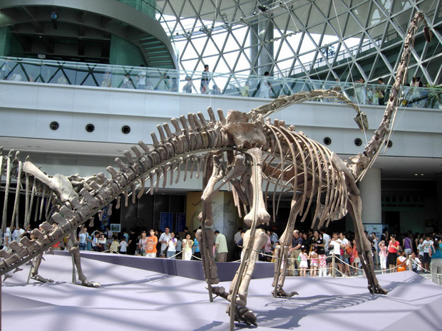 Shanghai Science and Technology Museum Dinosaur Skeleton