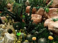 South China Botanical Garden Exotic Cactus