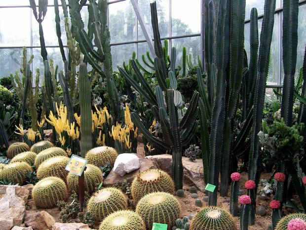 South China Botanical Garden Ball Cactus