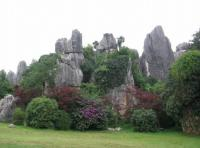 Stone Forest Scenery