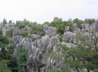 Stone Forest Landscape
