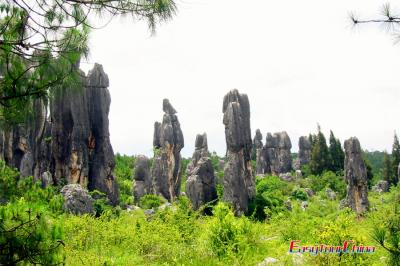 Stone Forest Beauty