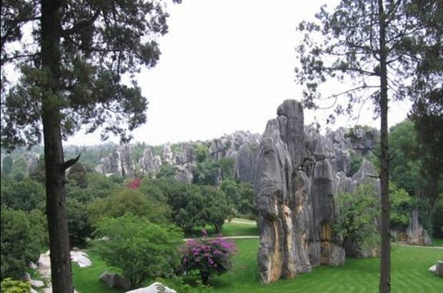 Scenic Stone Forest