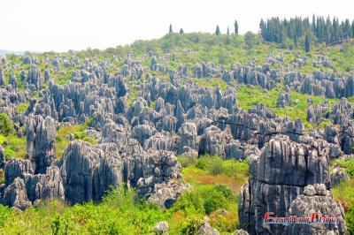 Spectacle Karst Landform of Stone Forest