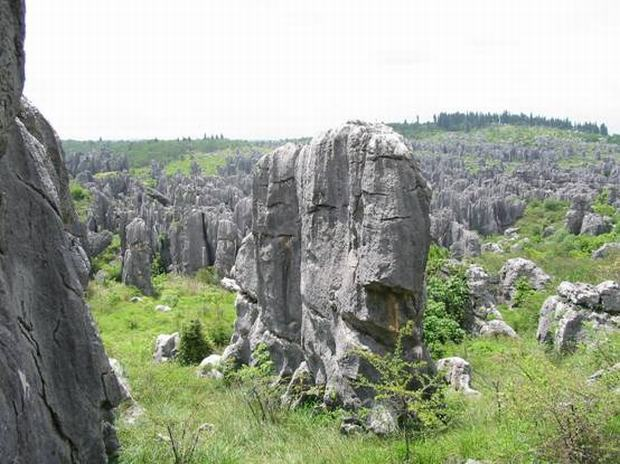 Stone Forest Sight