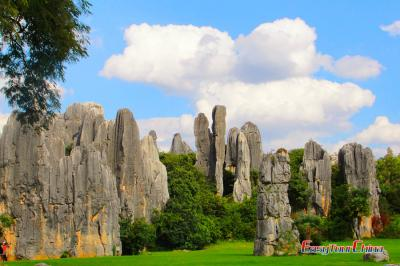 Marvelous Stone Forest Landscape