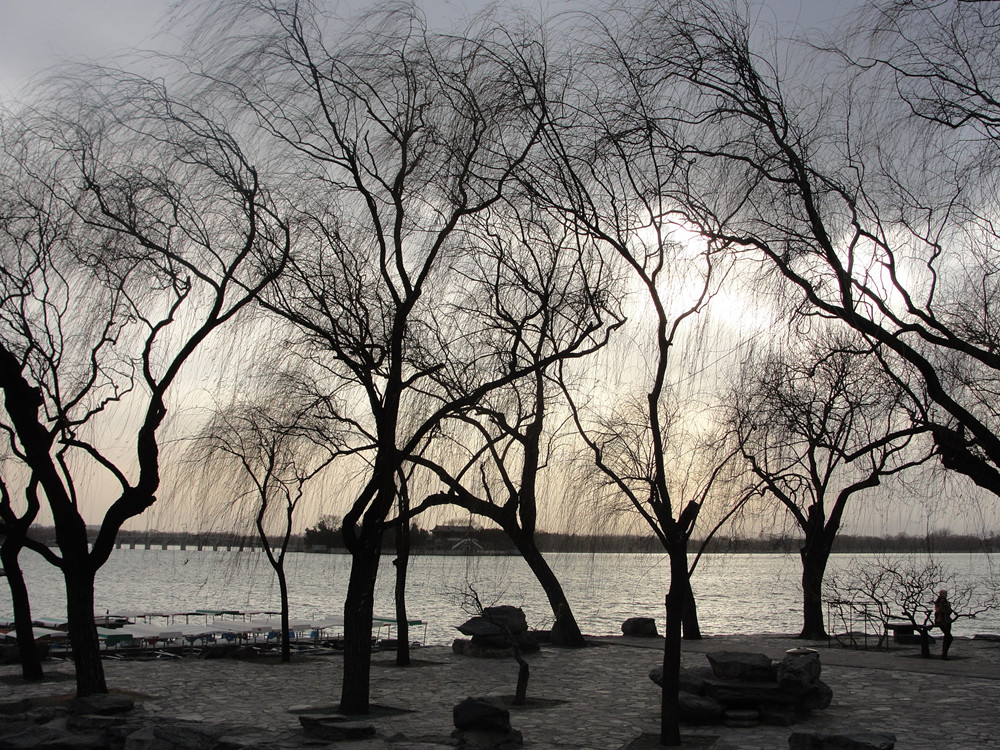 Leafless Trees in Summer Palace during Winter Time