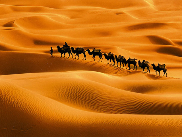 Camel Train Passing Desert Taklamakan Desert Pictures