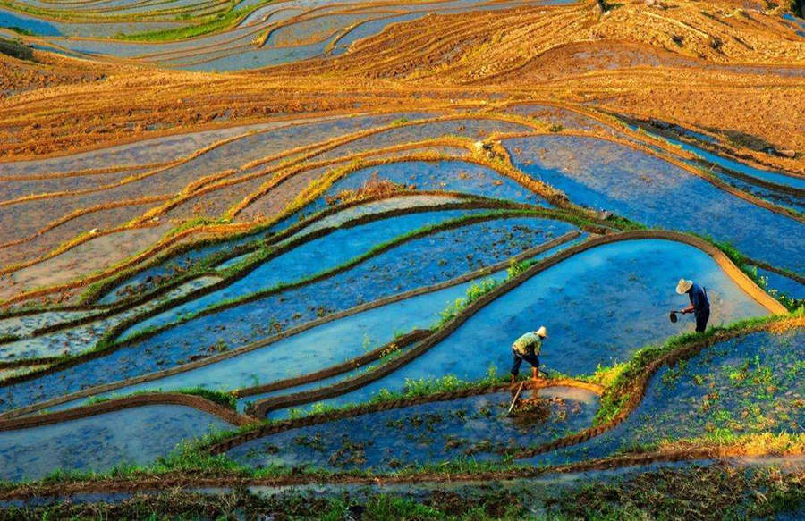 Yunhe Rice Terraces in China