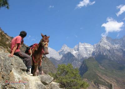 Tiger Leaping Gorge Mule Riding