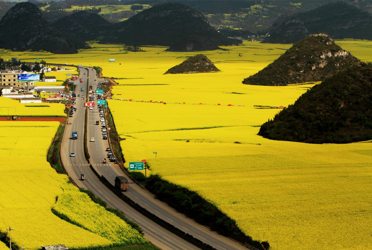 Top China Countryside To Enjoy Rapeseed Flowers In March