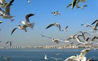 Birds at Poyang Lake