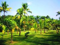 Tropical Botanic Garden Scenery