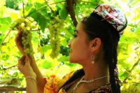 Travel Photos of Uygur Minority Girl Picking Grapes