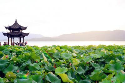 West Lake with Lotus Flowers
