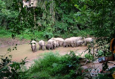 Image of Elephant Family in Wild Elephant Valley