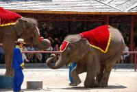 Enjoy Elephants Show