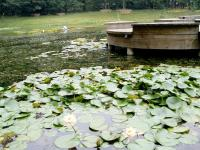 Wuhan Botanic Garden in Summer