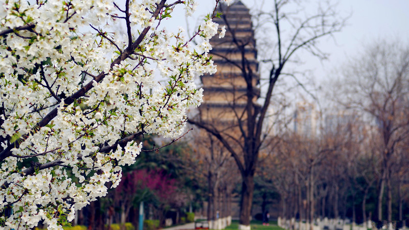 Small Goose Pagoda in Spring