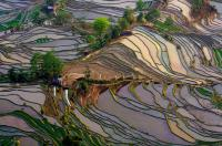 yuyuanyang  terraced rice fields