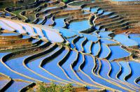 yuanyang paddy fields