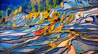 yunnan yuanyang rice terraced fields