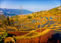 terraced fields yunnan