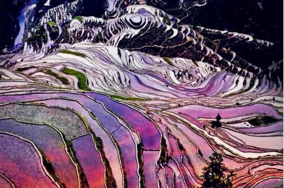 Colorful Yuanyang Rice Fields
