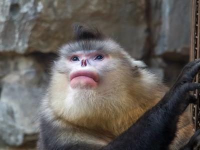 Yunnan Golden Monkey National Park