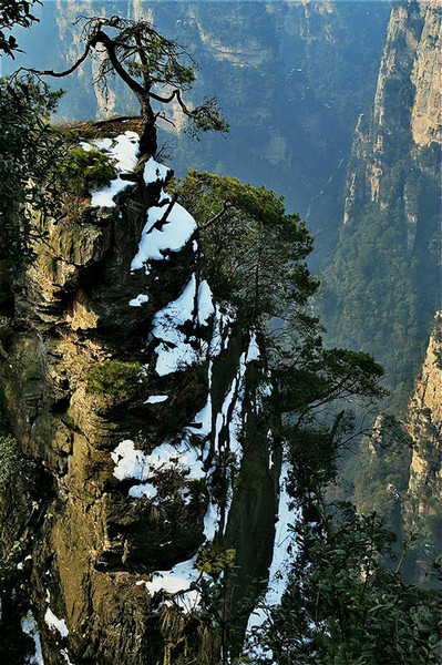 Odd Trees in Zhangjiajie
