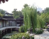 Zhanyuan Garden Green Willow